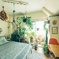 観葉植物で部屋を彩ろう。おしゃれで映える飾り方のアイデア