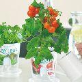 初心者でも楽しめる。家庭菜園の始め方と育てやすい野菜の種類