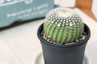 サボテンを育てて飾ろう。初めての1鉢におすすめなのはこの8種!