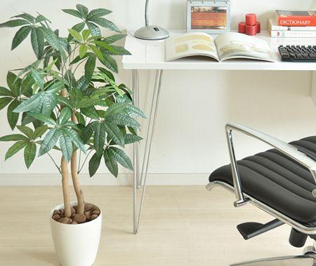 モダンテイストの部屋に合わせたい観葉植物