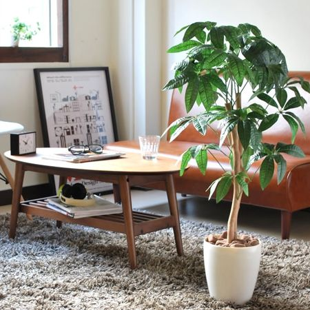 北欧テイストの部屋に合わせたい観葉植物
