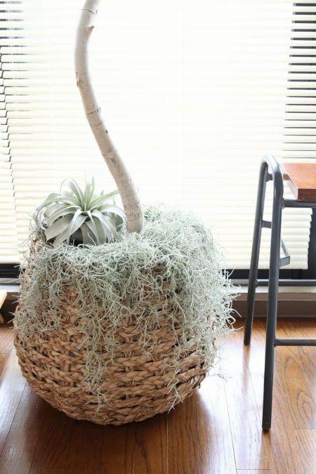 土隠しにも一役。観葉植物の株元に飾る