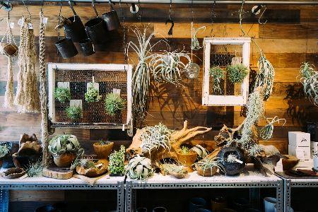 流木や木製雑貨を使って、ワイルドに飾る