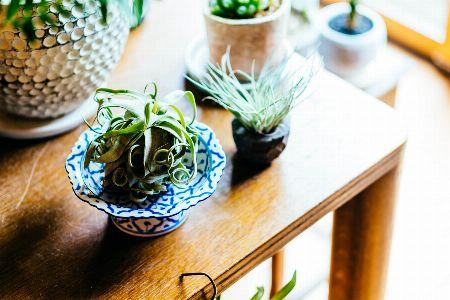 お気に入りの陶器や鉢に飾る