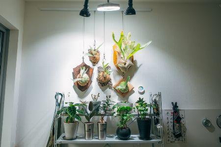 ディスプレイのように、LEDライトを使って育てる&飾る