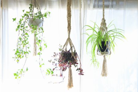 葉の形や色だけではなく、吊るす高さも変えて飾る