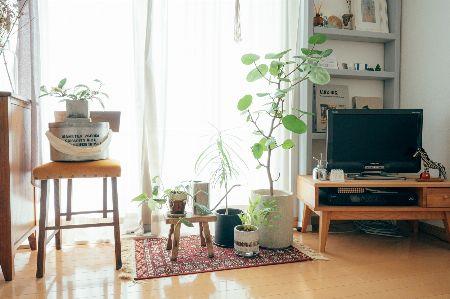 お気に入りの観葉植物を選ぼう