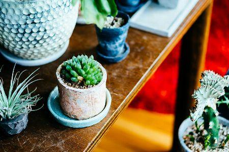 部屋のインテリアとしても人気の多肉植物