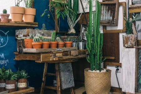 鉢のトーンを統一。園芸店のような部屋作り