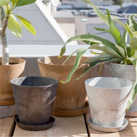 植え替えの土は観葉植物用、鉢は適度なサイズを選ぼう