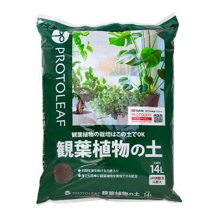植え替えの土は観葉植物用、鉢は適度なサイズを選ぼう 2枚目の画像