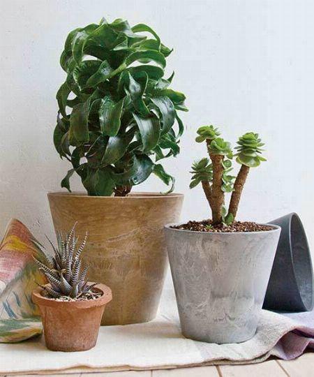 おしゃれなプランターで観葉植物や家庭菜園を彩ろう