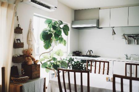 1鉢でインパクト大。室内のシンボルツリーに