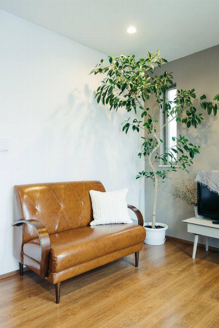 大きなガジュマルは部屋のシンボルツリーに
