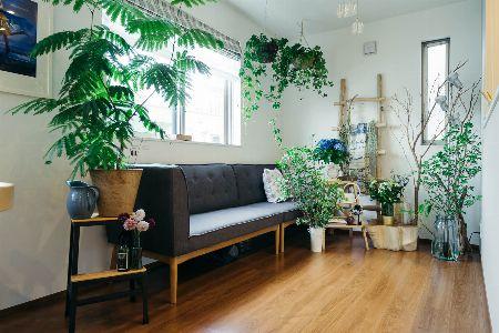 たくさんの植物と合わせて、ソファを囲むように飾る