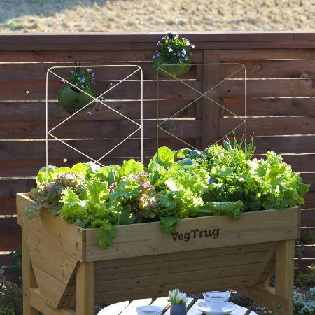 ベランダや庭で始める家庭菜園が今、人気です