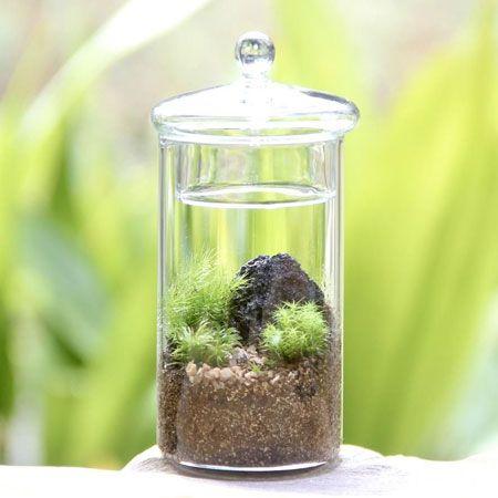 苔などの植物