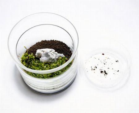土全体を水で湿らせ、苔などを植えていく