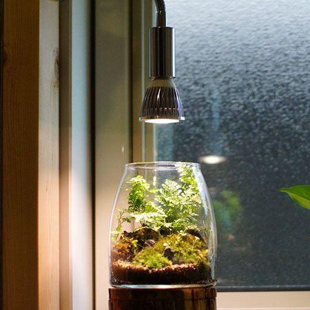 日光が足りない場合には植物育成用LEDライトを