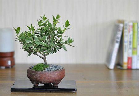 盆栽よりも手軽に始められると人気の「ミニ盆栽」とは?
