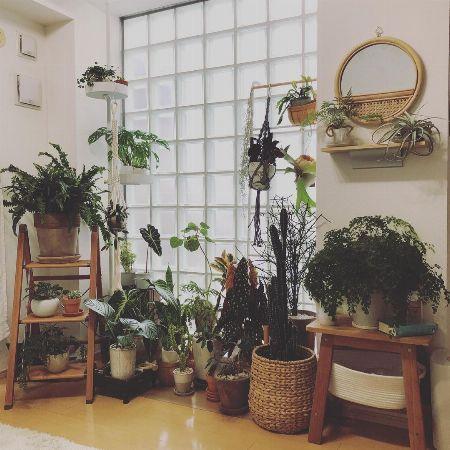 観葉植物と一緒に窓辺に飾る