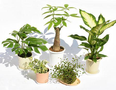 『マルブン』観葉植物5点セット