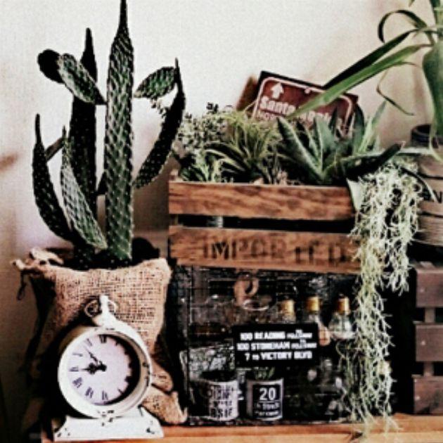 """""""男前""""な観葉植物で作る、癒しとくつろぎの空間術"""
