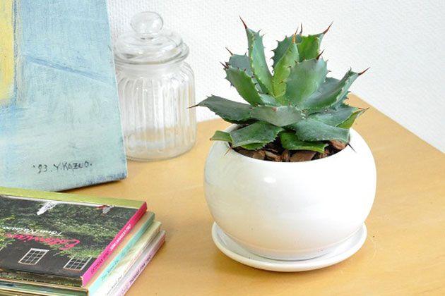 多肉植物で部屋をおしゃれに。始めに知っておきたい置き方や育て方のコツ