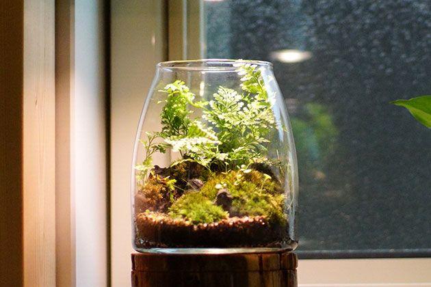 ガラスの中で育てるテラリウム。作り方や育てやすい植物の種類を紹介